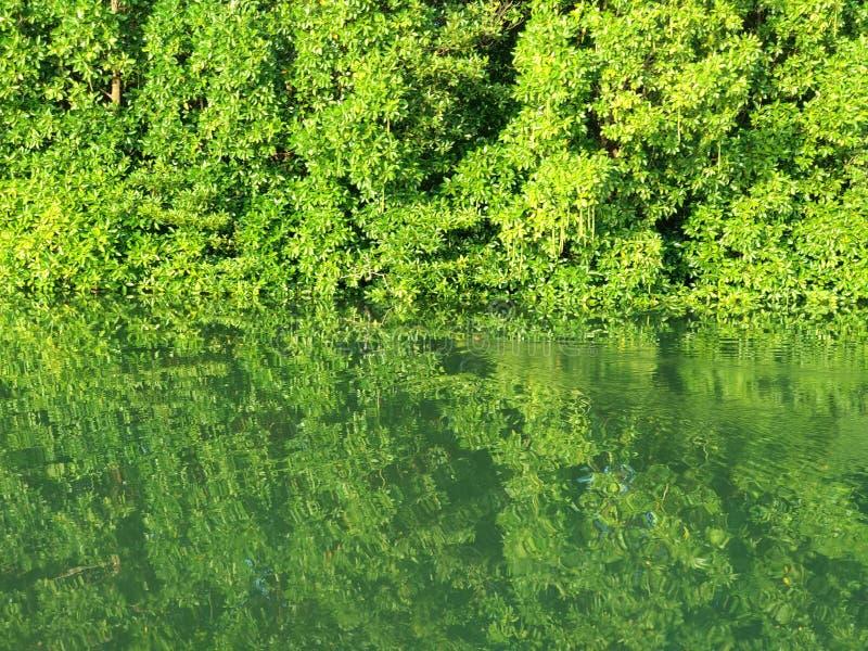 Rivière de Manggar photographie stock libre de droits
