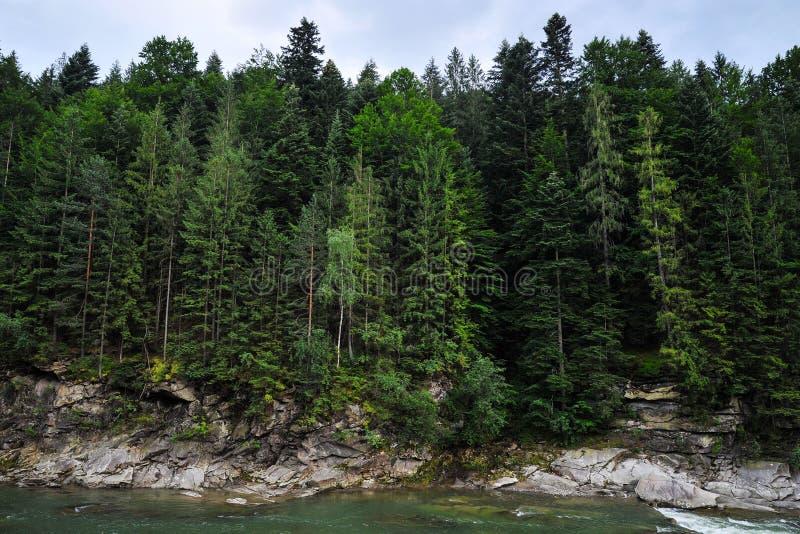 Rivière de montagne à l'arrière-plan d'une falaise avec une forêt photographie stock