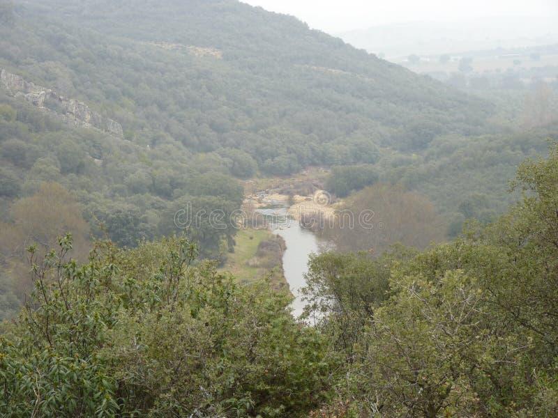 Rivière de montagne au milieu de forêt verte photographie stock