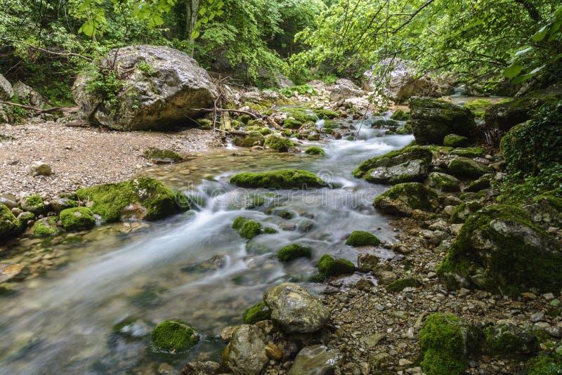 Rivière de montagne dans la forêt et le terrain de montagne, canyon grand, Crimée photographie stock libre de droits