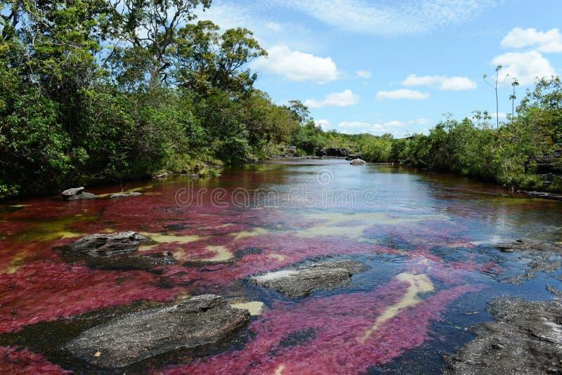 Rivière de montagne de Canio Cristales. Colombie images stock