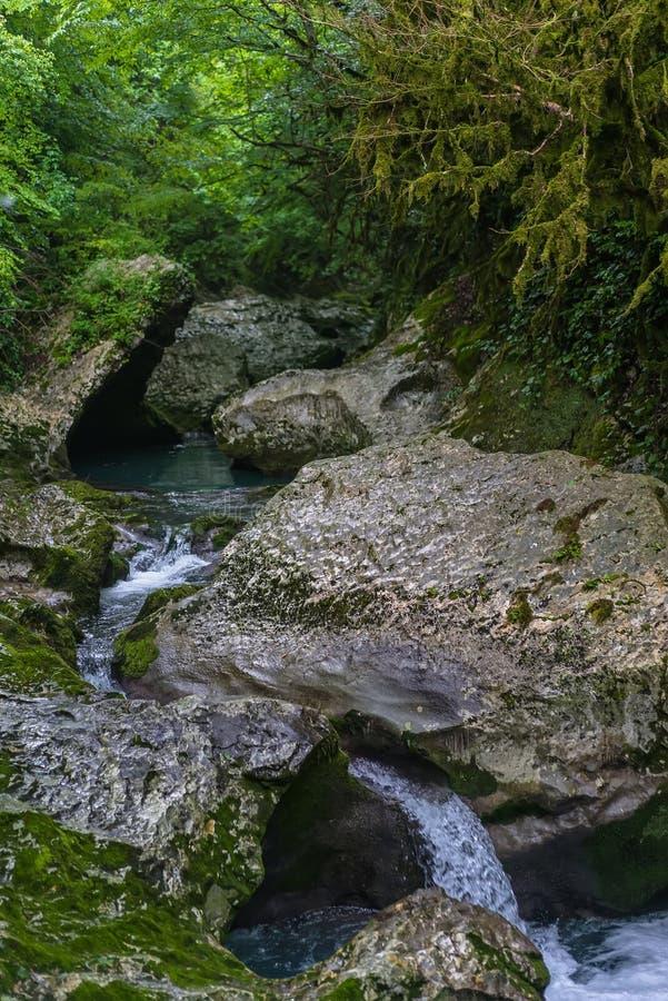 Rivière de montagne traversant l'écoulement rapide de forêt verte au-dessus de la roche couverte de la mousse image libre de droits