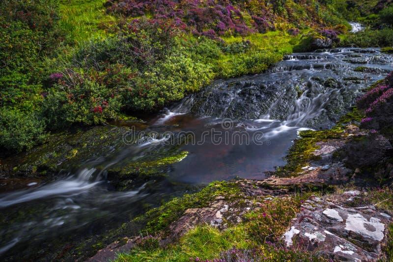 Rivière de Moutain avec la cascade de cascade en vallée scénique avec des fleurs sur l'île de Skye In Scotland image stock