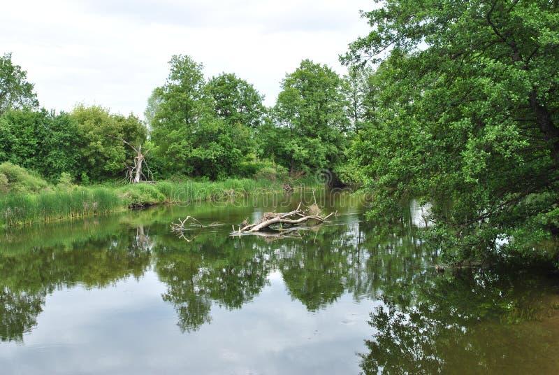 Rivière de Voronezh, Russie image stock