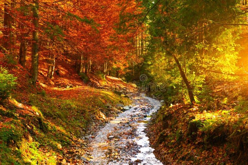 Rivière de vue et de forêt d'automne avec la lumière du soleil chaude photos libres de droits