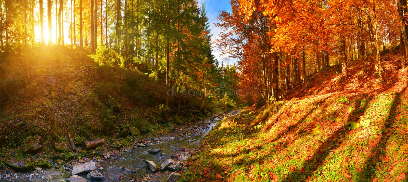 Rivière de vue et de forêt d'automne avec la lumière du soleil chaude photographie stock