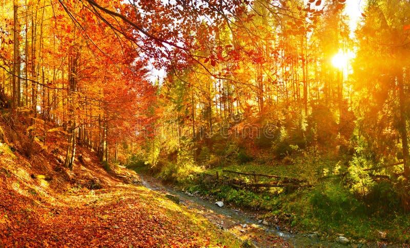 Rivière de vue et de forêt d'automne avec la lumière du soleil chaude photo stock