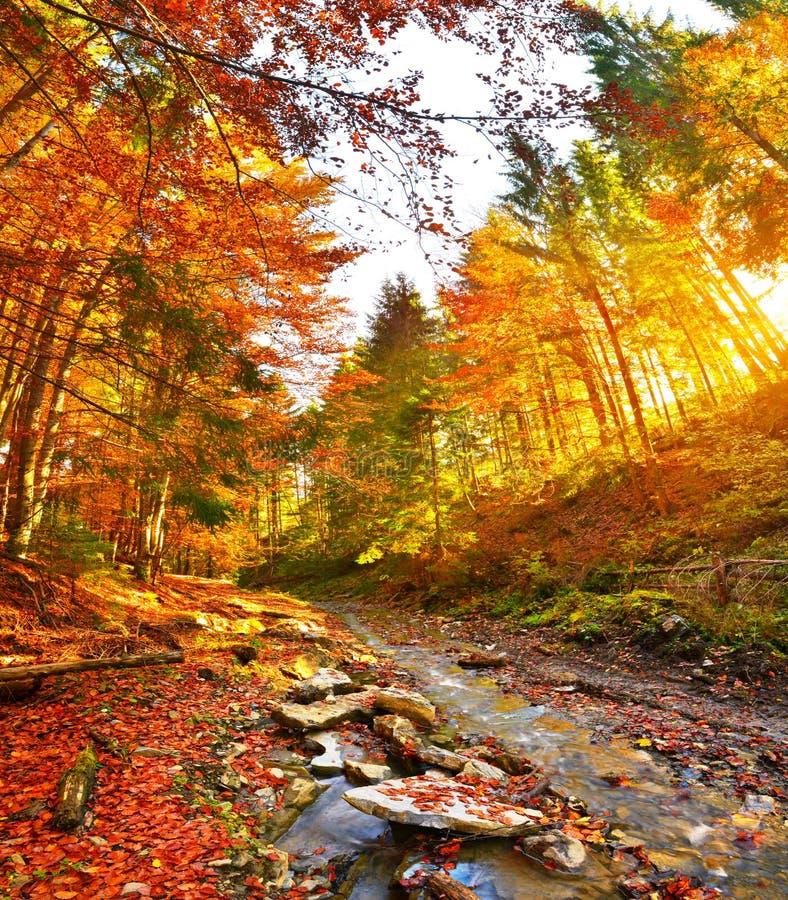Rivière de vue et de forêt d'automne avec la lumière du soleil chaude photographie stock libre de droits