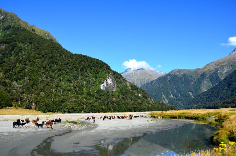 Download Rivière De Wilkin, Passage De Gillespie Image stock - Image du nature, vacances: 76084915