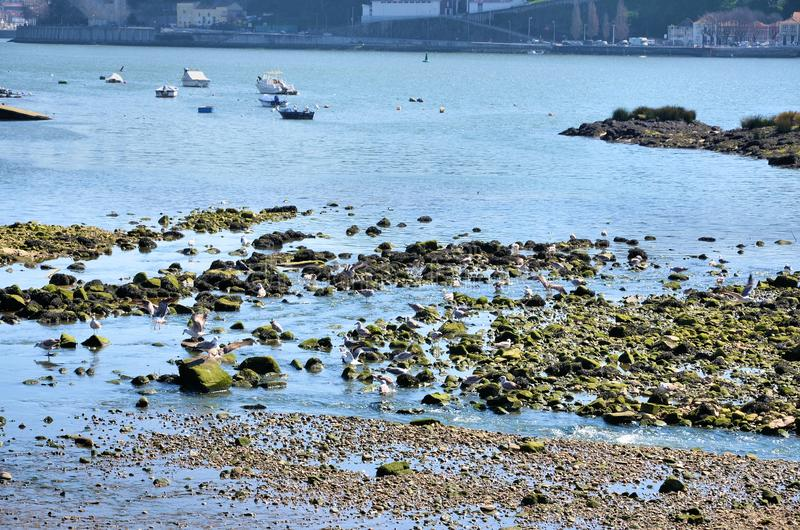 Rivière Douro image stock