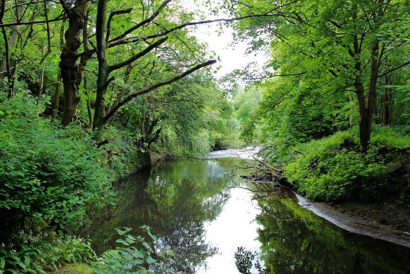 Rivière en vallée photographie stock