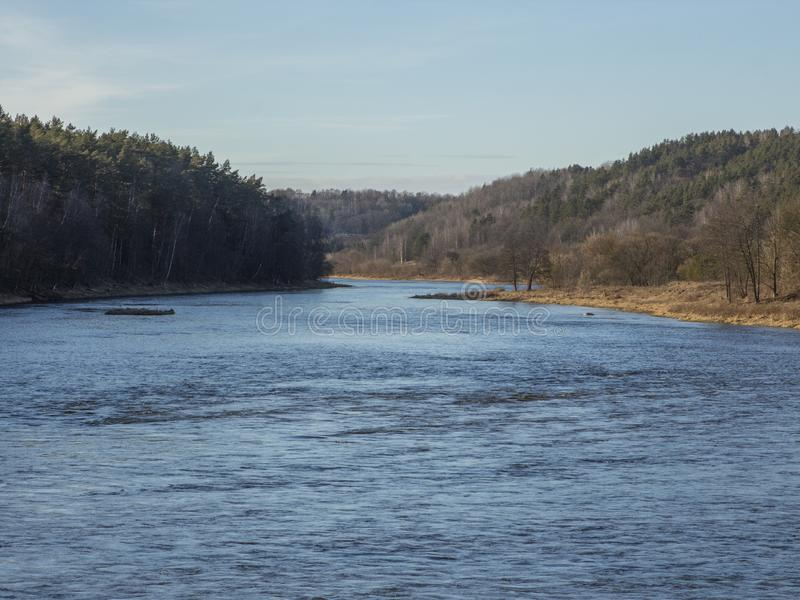 Rivière entourée par des arbres forestiers photos libres de droits