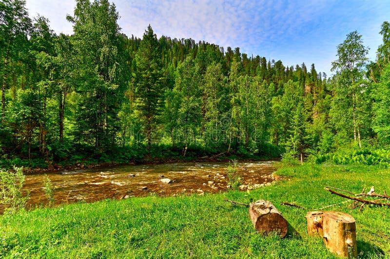 Rivière et bois de montagne photo libre de droits