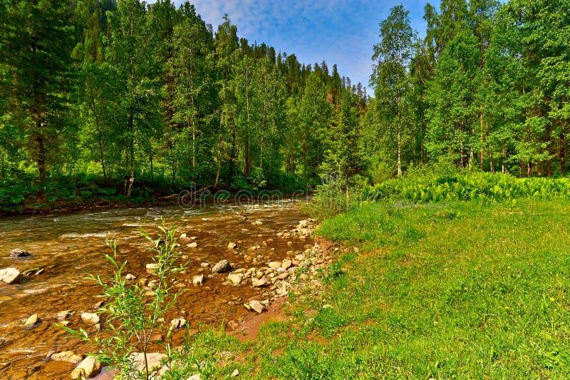 Rivière et bois de montagne image stock