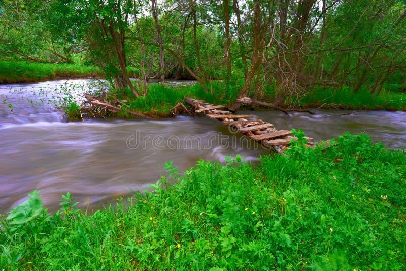 Rivière et bois de montagne photographie stock