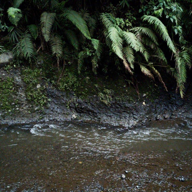 Rivière et flora& x27 ; s photographie stock libre de droits