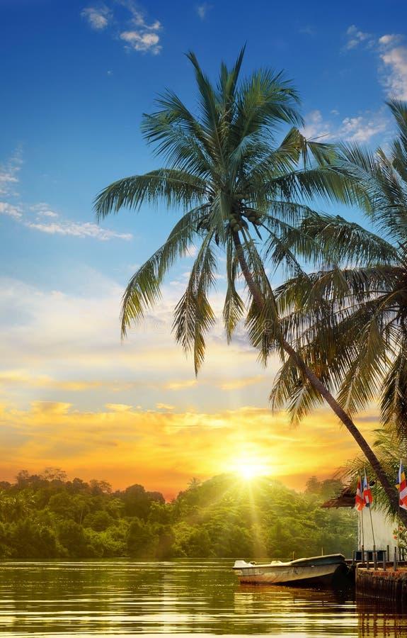 Rivière et paumes tropicales photos stock