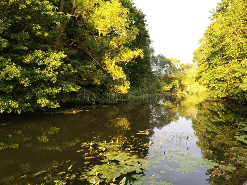Rivière Forest Bridge Evening images stock