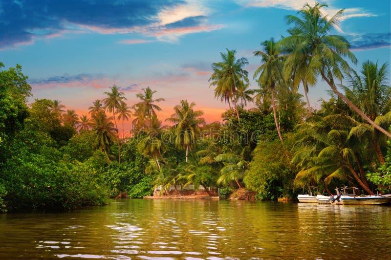 Rivière, lever de soleil et paumes tropicales photographie stock libre de droits