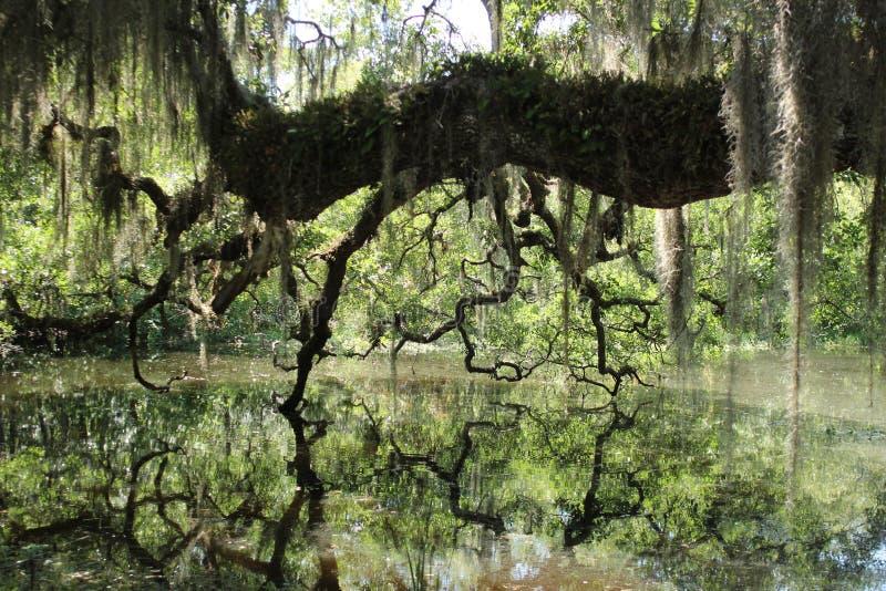 Rivière morte, île de Hontoon, la Floride photo stock