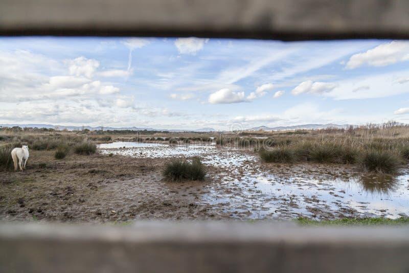 Rivière naturelle Llobregat, vue de delta de secteur par l'observation d'oiseau s photo stock