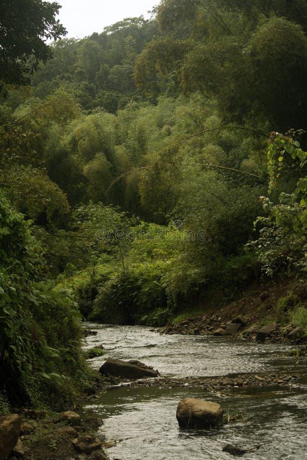 Rivière par des montagnes des Fidji image stock