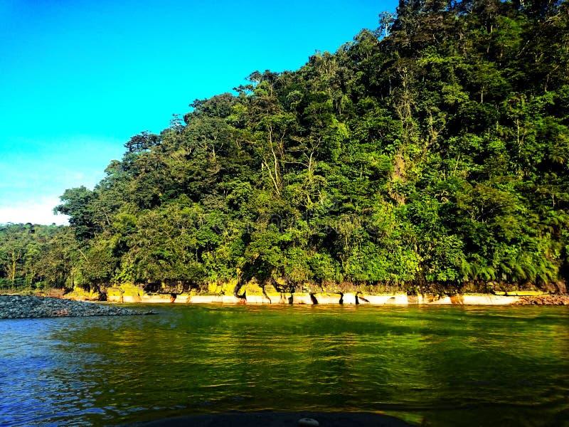 Rivière par la jungle photo stock