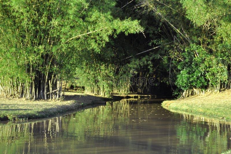 Rivière par la nature par la forêt de bambous images libres de droits