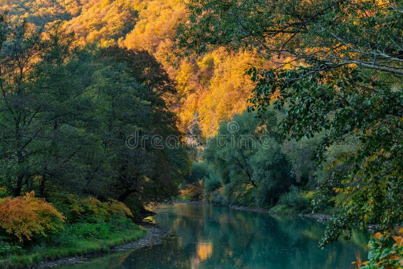 rivière pendant l'automne de forêt photos libres de droits