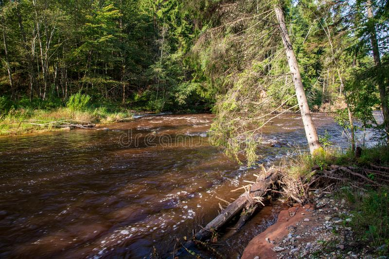 rivière rapide dans la forêt images libres de droits