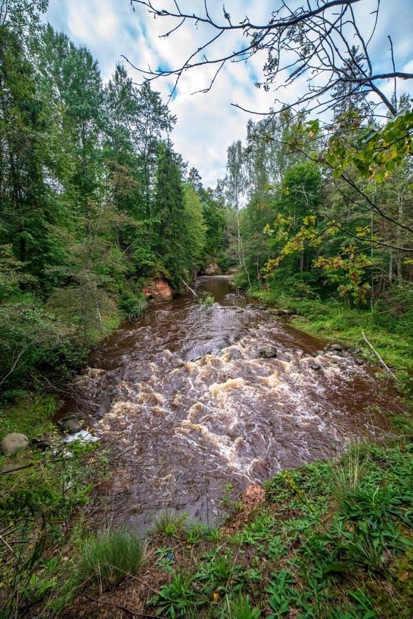 rivière rapide dans la forêt photo libre de droits