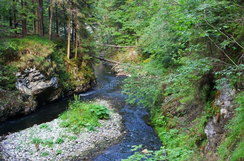 Rivière sauvage dans la forêt images libres de droits