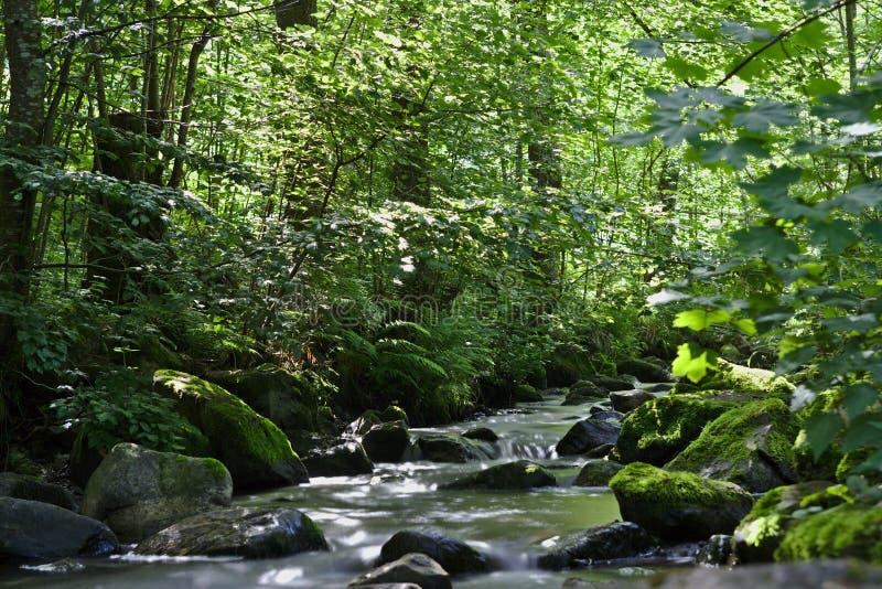 Rivière sauvage dans les bois du Ravennaschlucht images libres de droits