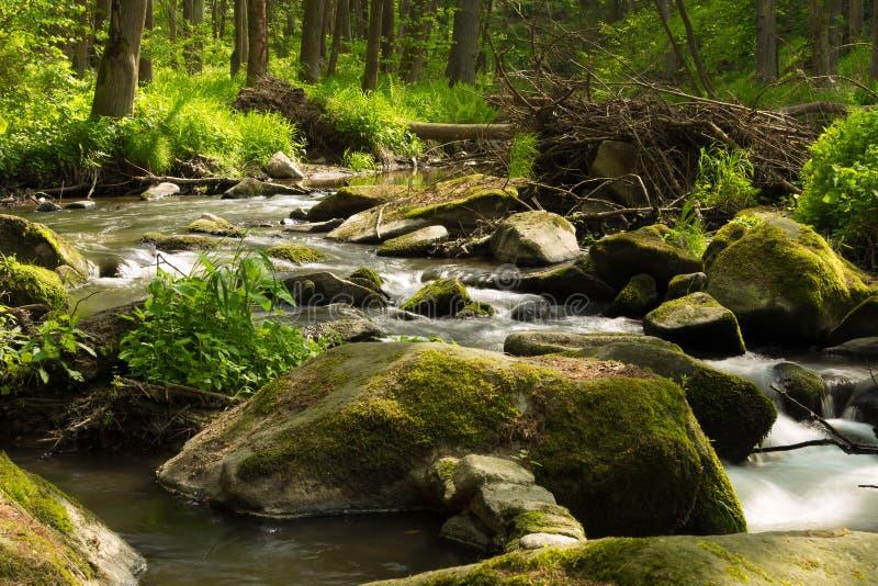Rivière sauvage de petite montagne au printemps photos libres de droits