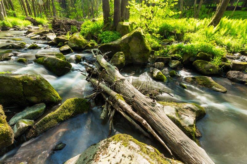 Rivière sauvage de petite montagne au printemps photographie stock