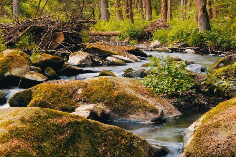 Rivière sauvage de petite montagne au printemps image libre de droits