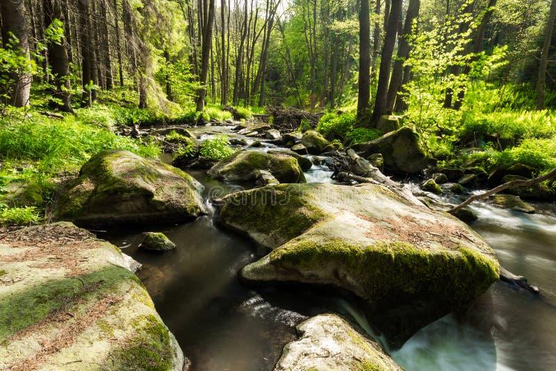 Rivière sauvage de petite montagne au printemps photo libre de droits