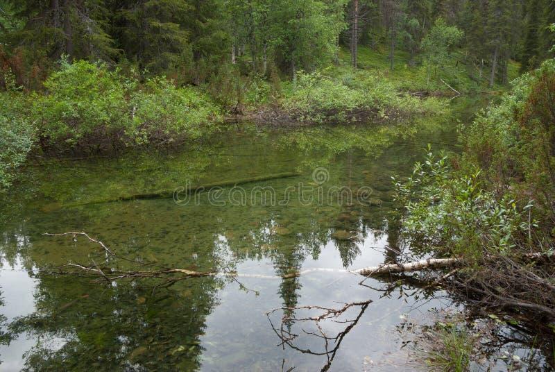 Rivière scandinave calme et claire au milieu de forêt photo stock