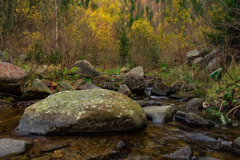 Rivière soyeuse pendant l'automne tôt de forêt photographie stock libre de droits