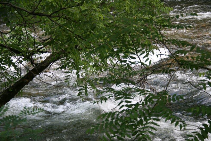 Rivière tourmentée OR images stock