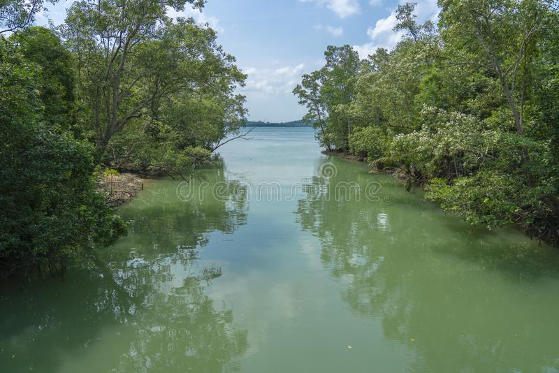 Rivière tropicale dans la jungle image stock