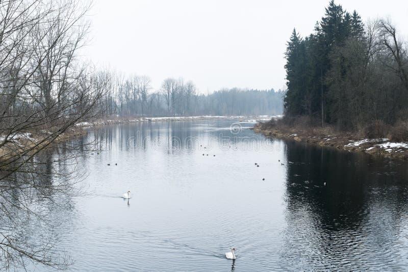 Rivière Wertach à Augsbourg en hiver photographie stock libre de droits