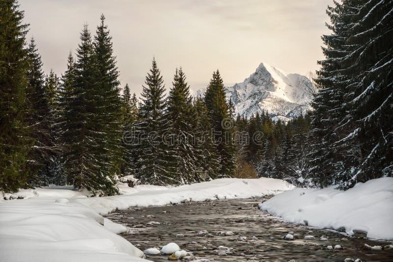 Rivier Bela in de winter met het piek Slowaakse symbool van onderstelkrivan op achtergrond, hemel van de ochtend de roze nevel royalty-vrije stock fotografie