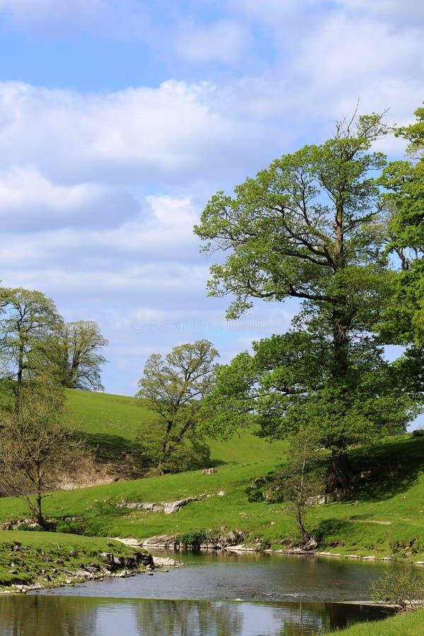 Rivier Bela en bomenplatteland dichtbij Milnthorpe stock fotografie