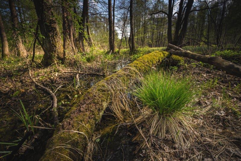 Rivier Dajna dichtbij Mragowo, Polen royalty-vrije stock afbeeldingen