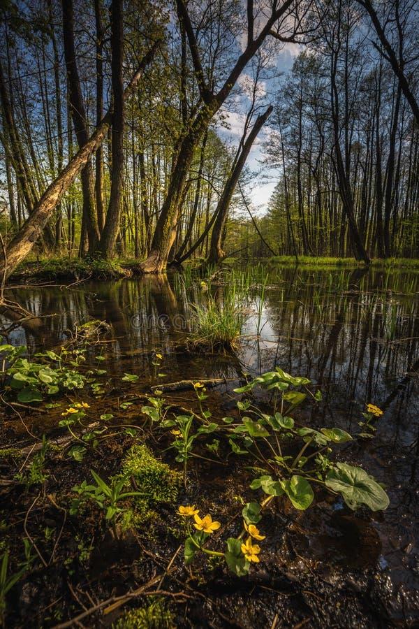 Rivier Dajna dichtbij Mragowo, Polen royalty-vrije stock afbeelding