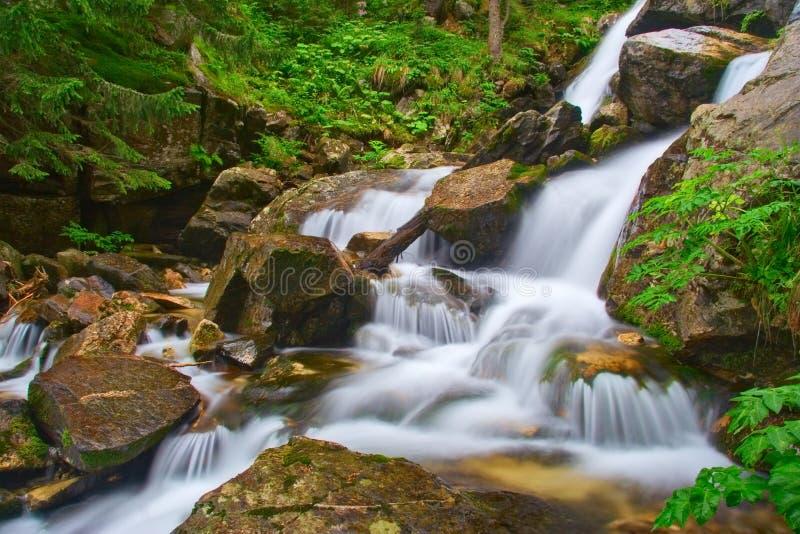 Rivier in de bossen van Pirin royalty-vrije stock foto's