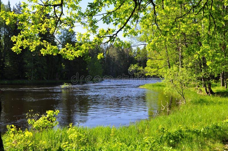 Rivier in de lente stock afbeeldingen