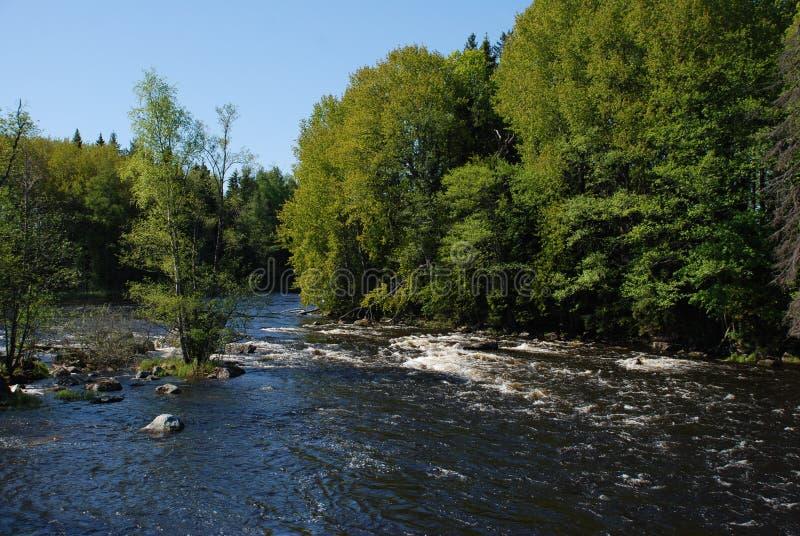 Rivier die in de Lente stroomt stock fotografie