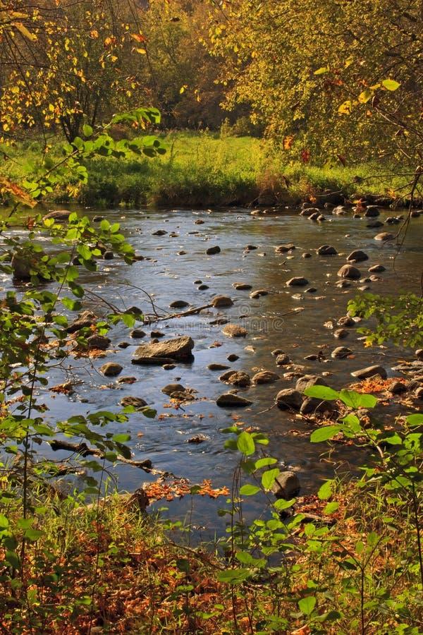Rivier die het bos van de Herfst doorneemt stock fotografie
